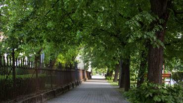 Linden Tree Alley of Gyomaendrőd
